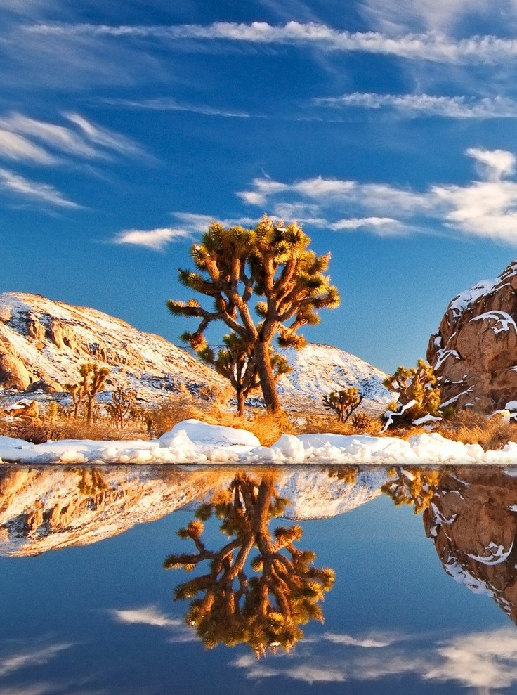 Gorgeous View Of Joshua Tree National Park in California, USA