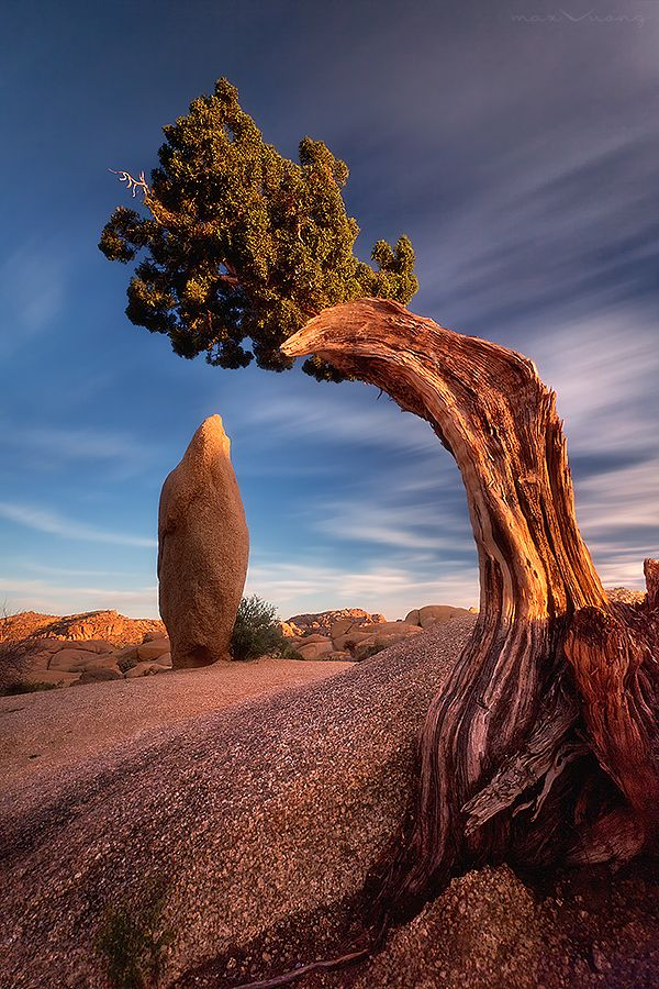 Lovely Image Of Joshua Tree National Park in California, USA