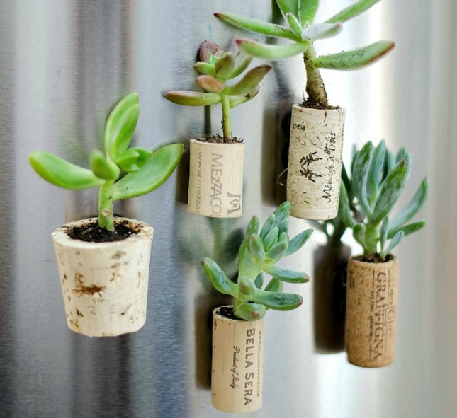 Shelter-Your-Succulents