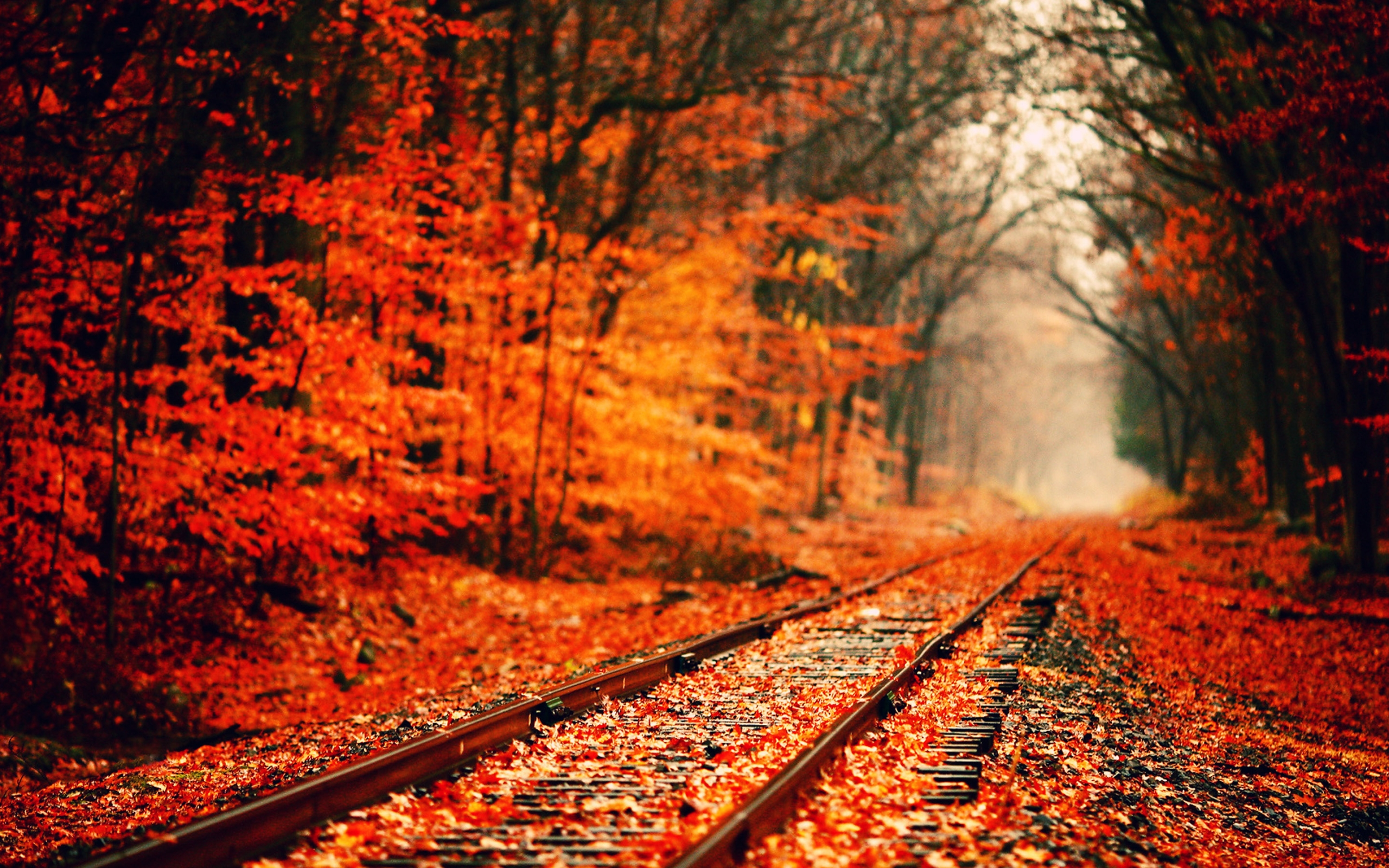 forest-autumn-wallpaper
